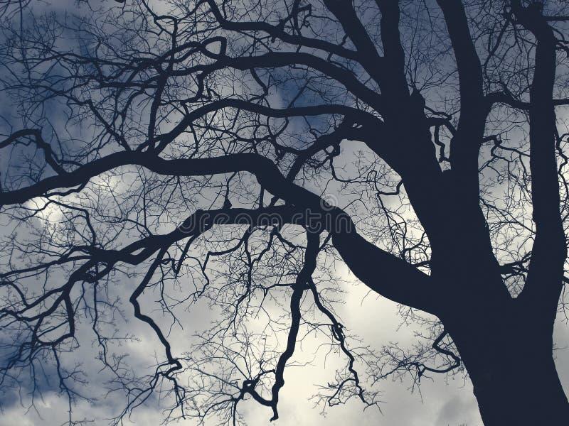 大可怕树 图库摄影