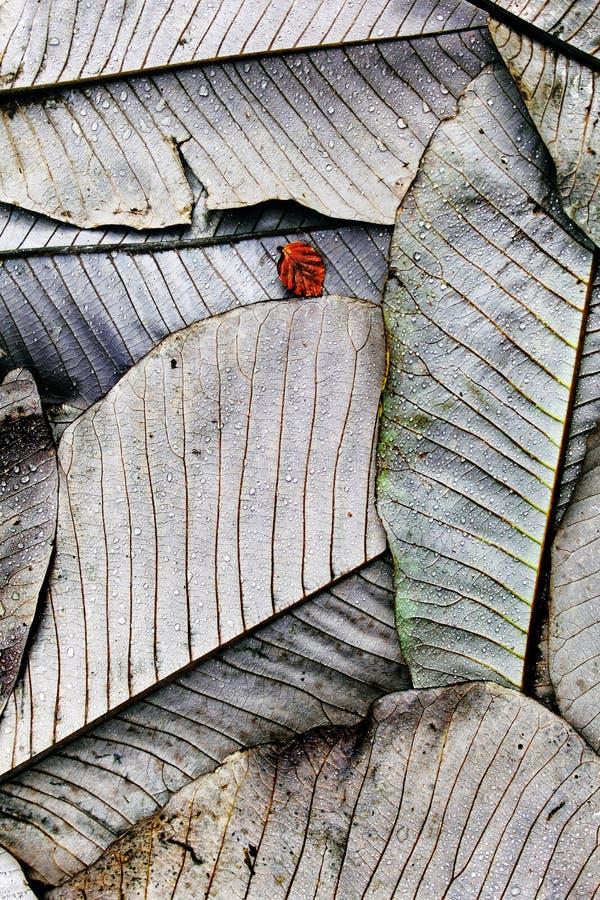 大叶子&一点叶子-城堡肯尼迪,苏格兰 免版税库存图片