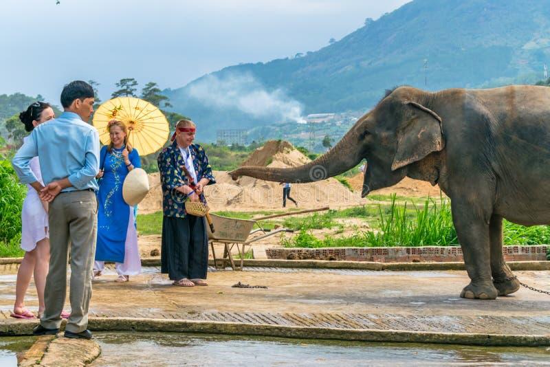 大叻,越南- 2019年4月15日:游人在大叻越南喂养与山的大象在背景中 免版税库存照片