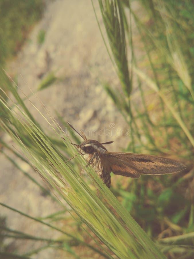 大和美丽的飞蛾 免版税图库摄影