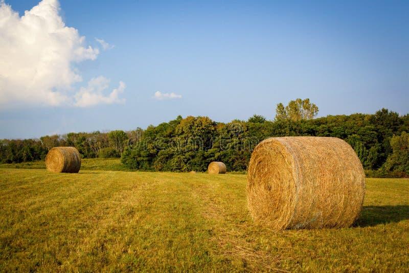 大圆的干草捆坐农田在肯塔基 库存图片