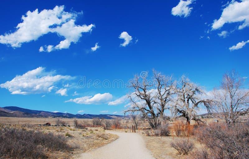 大在冬天之下的三角叶杨老天空 图库摄影