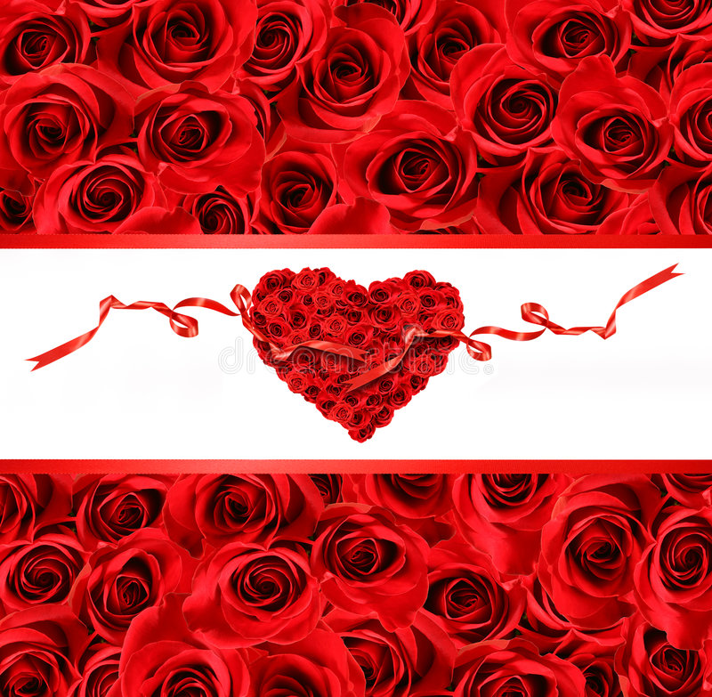 大在红色玫瑰查阅 库存照片