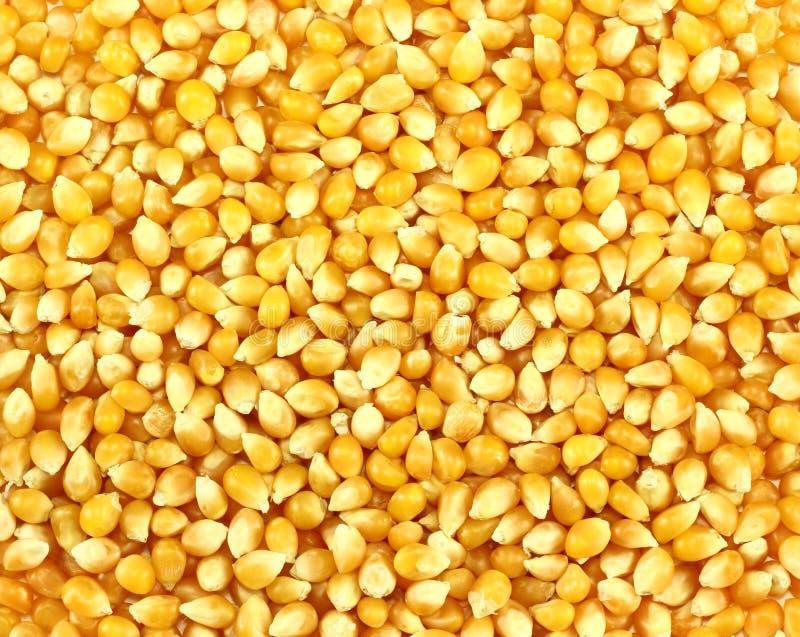 玉米五谷 免版税库存图片