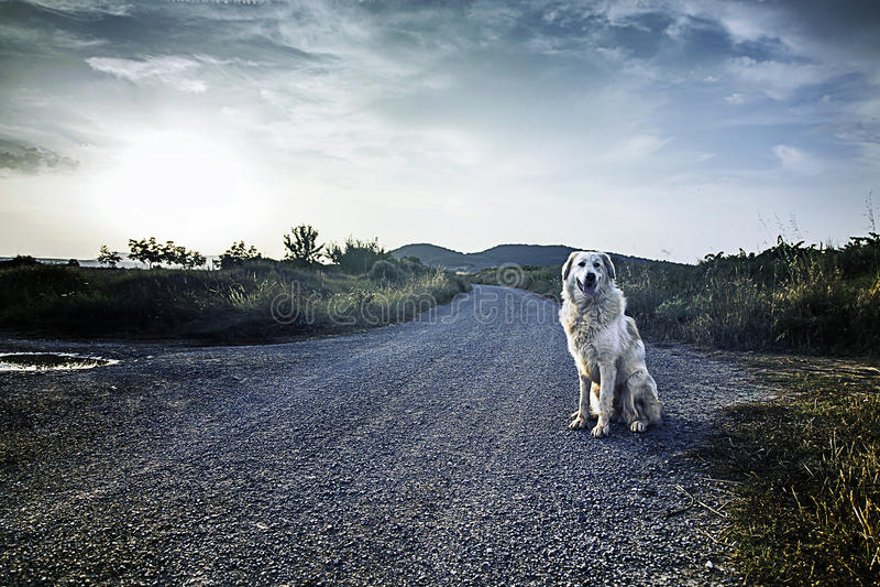 大型猛犬狗日落 库存照片