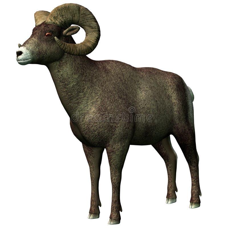 大垫铁绵羊 库存例证