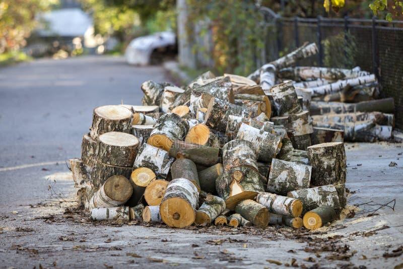 大堆切好的桦树树干户外在明亮的好日子  免版税图库摄影