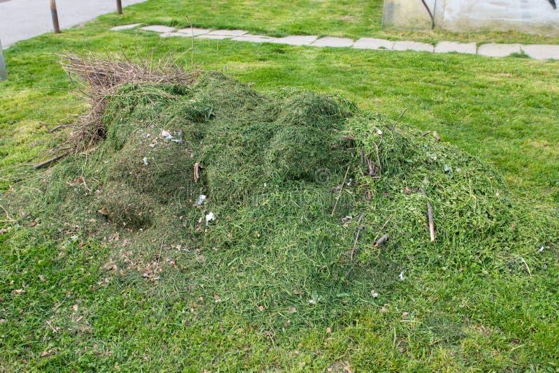 大堆新近地裁减绿草在公园 库存图片