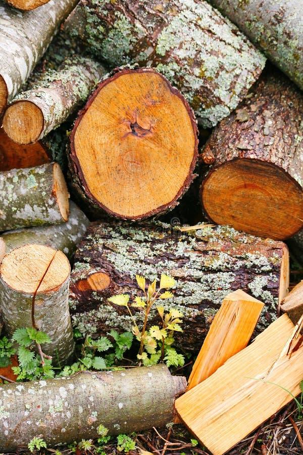 大堆木柴 大堆壁炉的木柴 在堆堆的被锯的树干红色白杨木 库存图片