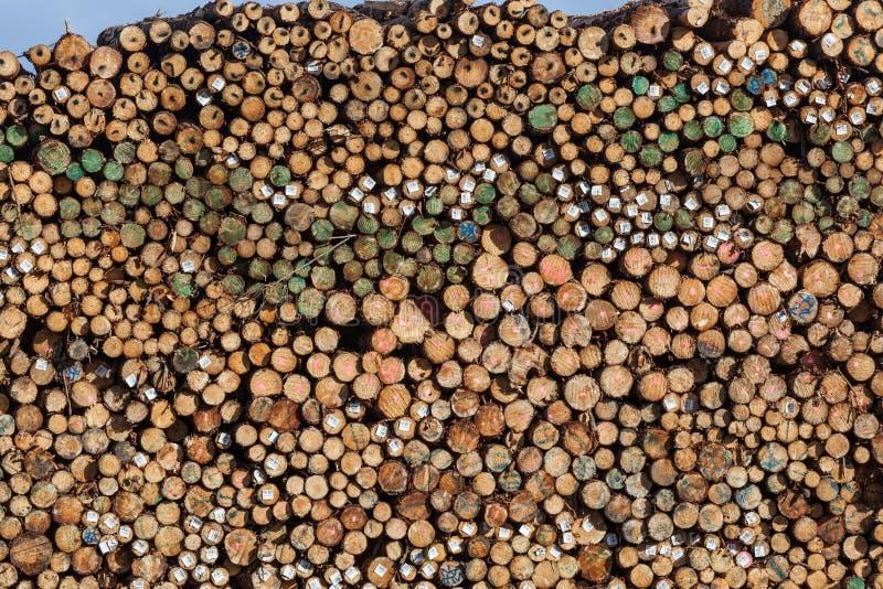 大堆树干在堆木场 免版税库存照片