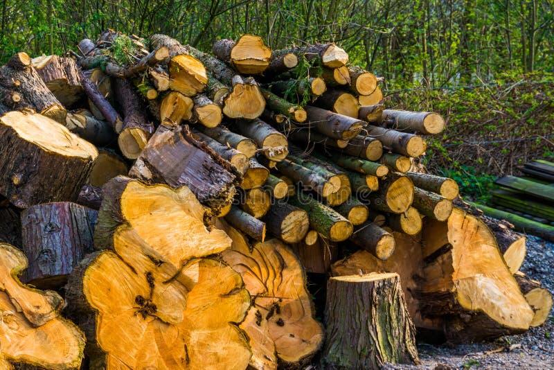 大堆被裁减的树干,被堆积的火木头,自然本底 免版税库存图片