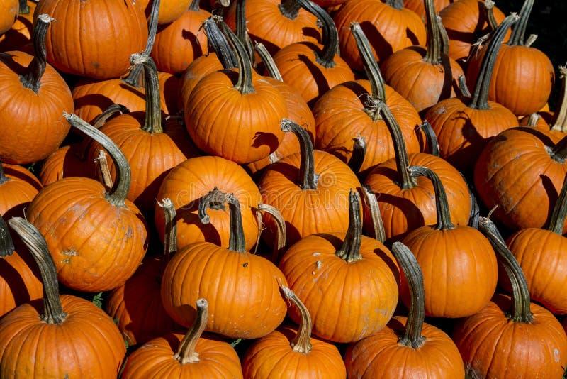 桔子雕刻南瓜的大堆在秋天节日图片