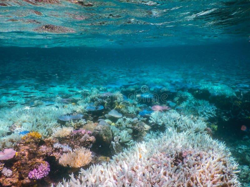 大堡礁佩戴水肺的潜水 免版税库存照片