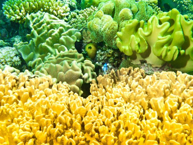 大堡礁的五颜六色的海绵 图库摄影
