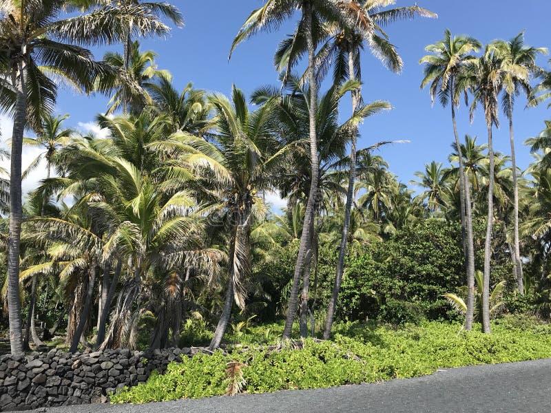 大夏威夷海岛 图库摄影