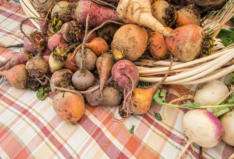 大头菜和白萝卜 免版税图库摄影