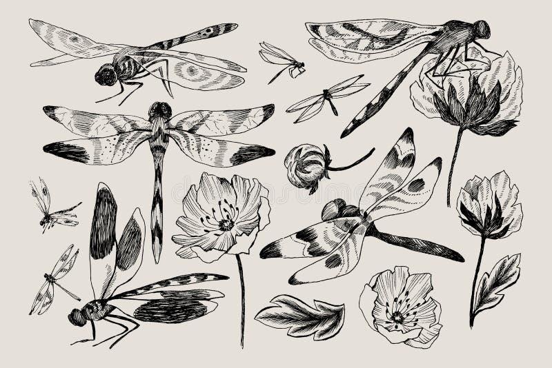 大套传染媒介花卉元素用黑白手拉的草本,野花和蜻蜓在剪影样式 向量图片