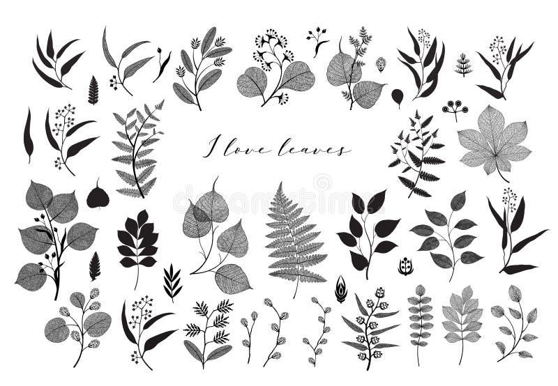 大套分支和叶子,秋天,春天,夏天 葡萄酒传染媒介植物的例证,在黑设计的花卉元素 库存例证