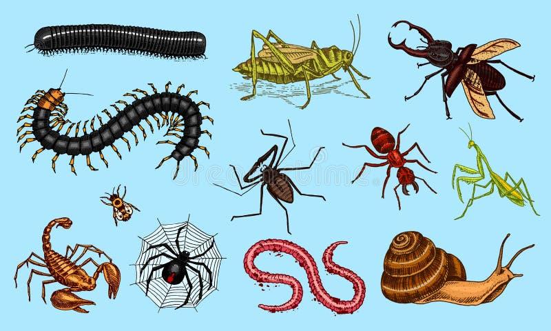 大套昆虫 葡萄酒宠物在房子里 臭虫甲虫蝎子蜗牛,鞭子蜘蛛,蠕虫蜈蚣蚂蚁蝗虫,螳螂 向量例证