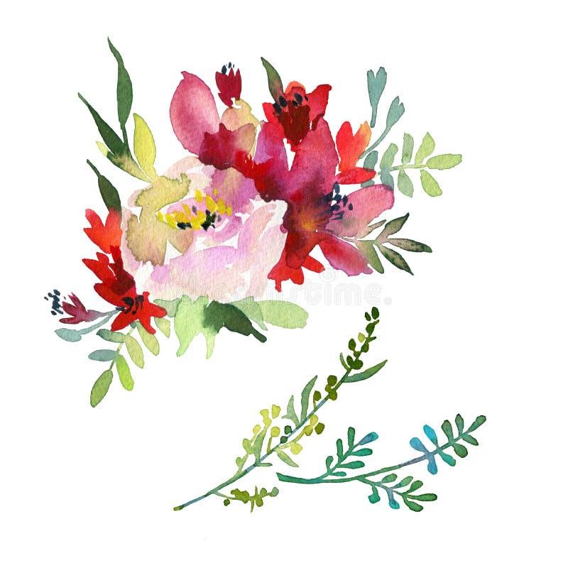 大套水彩元素 在白色和叶子隔绝的庭院和野花的例证,分支 库存例证