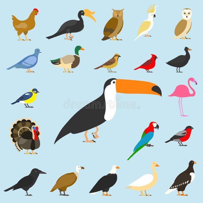 大套热带,家养和其他鸟,主教,火鸟,猫头鹰,老鹰,秃头,海,鹦鹉,鹅 掠夺 向量例证