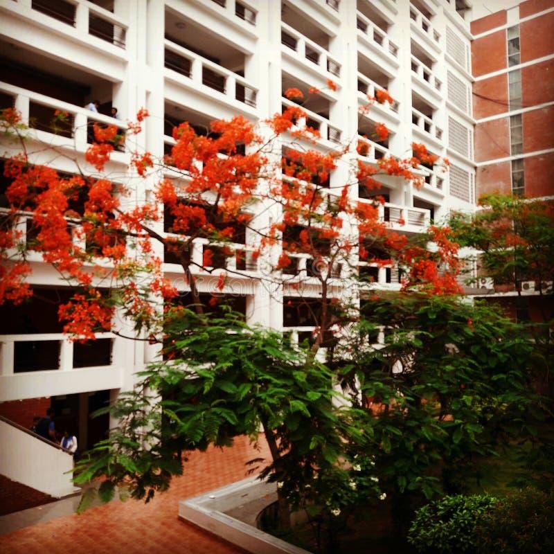 大学在孟加拉国 库存图片