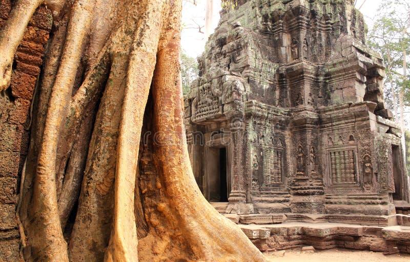大寺庙树和废墟在吴哥窟复合体,暹粒, C的 免版税库存图片