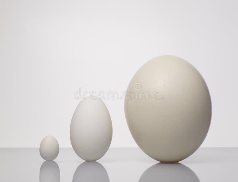 大小的不同的鸡蛋 免版税图库摄影