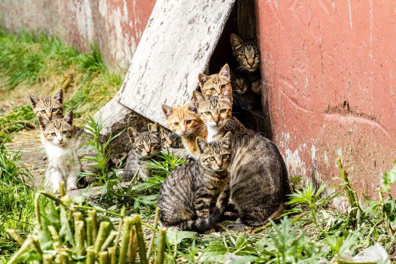 大小组在一条城市街道的无家可归的小猫在房子附近 图库摄影