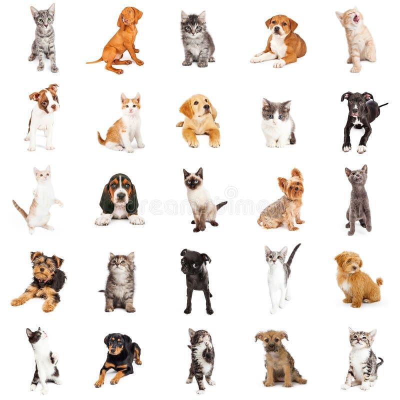 大小组小狗和小猫 免版税库存图片