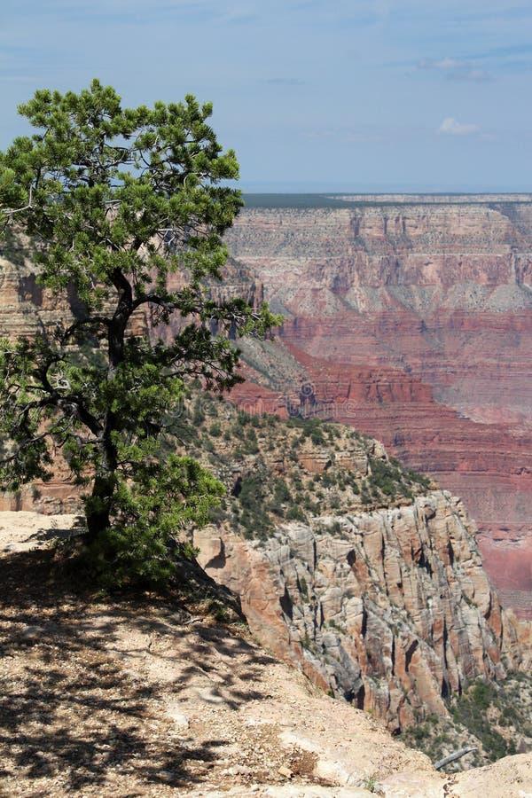 大峡谷景色,亚利桑那 免版税库存图片