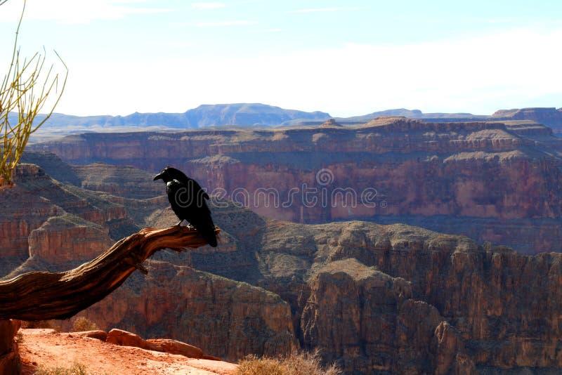 大峡谷,雕刻科罗拉多河在亚利桑那,美国 库存图片