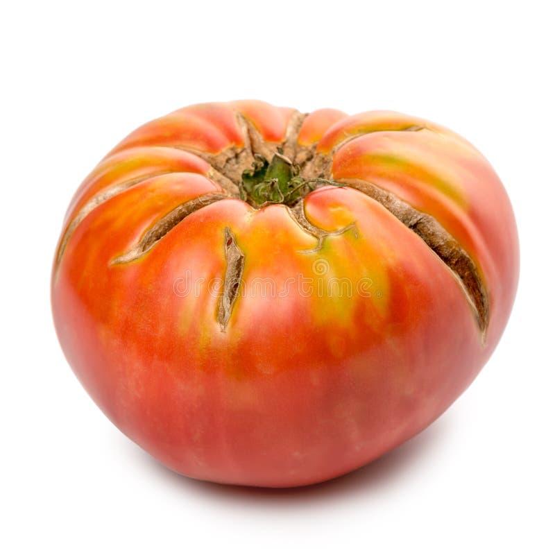 大成熟红色蕃茄菜在白色 免版税库存图片
