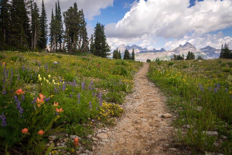 大提顿峰供徒步旅行的小道 库存图片