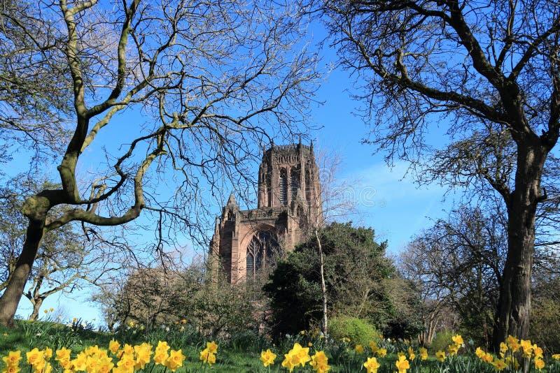 大教堂在利物浦 图库摄影