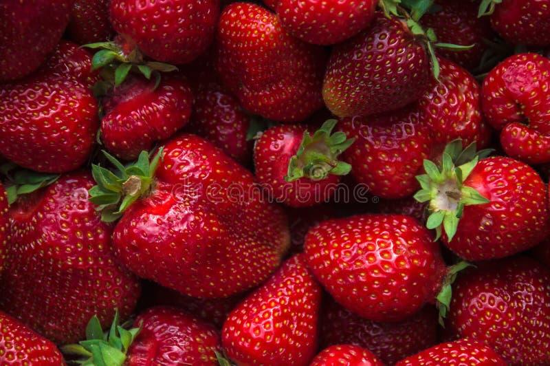大新草莓集合突然上升了接近 Res莓果 库存照片