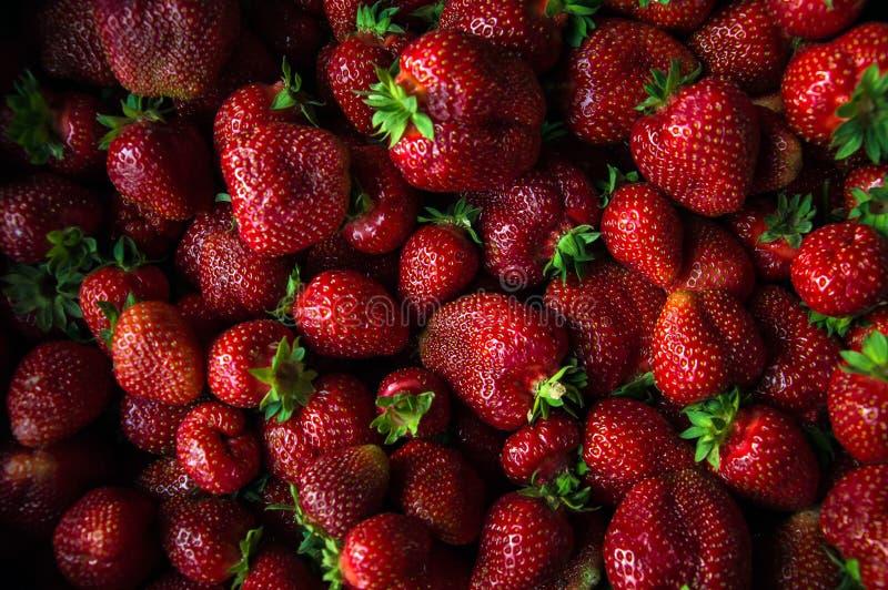 大新草莓集合突然上升了接近 Res莓果 库存图片