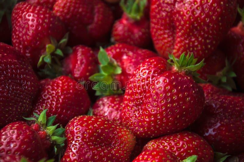 大新草莓集合突然上升了接近 Res莓果 免版税库存图片