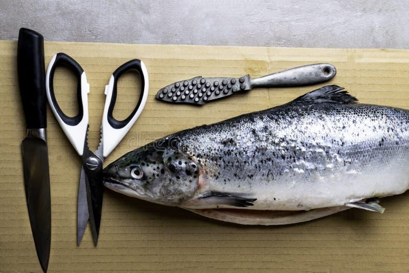 大新鲜的三文鱼、刀子和剪刀 切开鱼的准备 可贵的商业鱼 三文鱼是普遍的在饮食并且愈合 库存图片