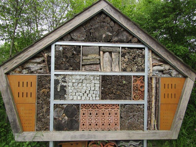 大昆虫和臭虫房子 免版税库存照片