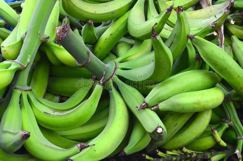 大束绿色香蕉,波多黎各人大蕉农场,绿色大蕉新收获  免版税图库摄影