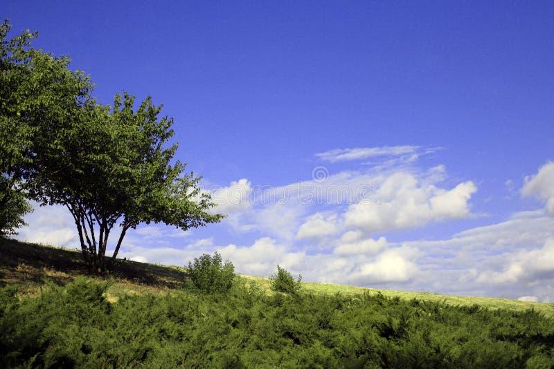 大树、太阳和蓝天 免版税库存照片