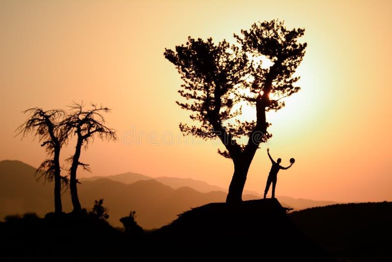 大树、自然旅行和平安的概念 库存图片