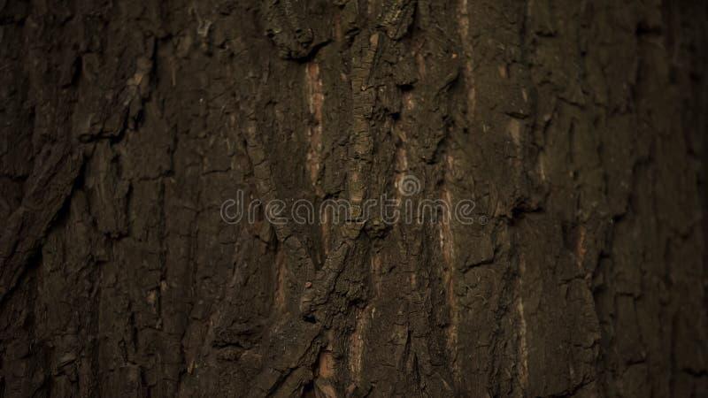 大树关闭树干,自然和森林保护,生态关心,植物学 图库摄影