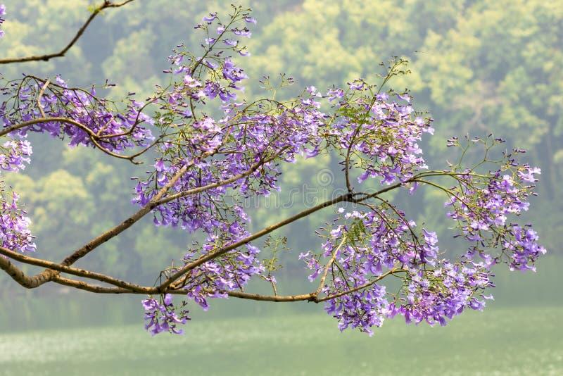 大树出版社分支和填装用紫罗兰色花 免版税库存照片