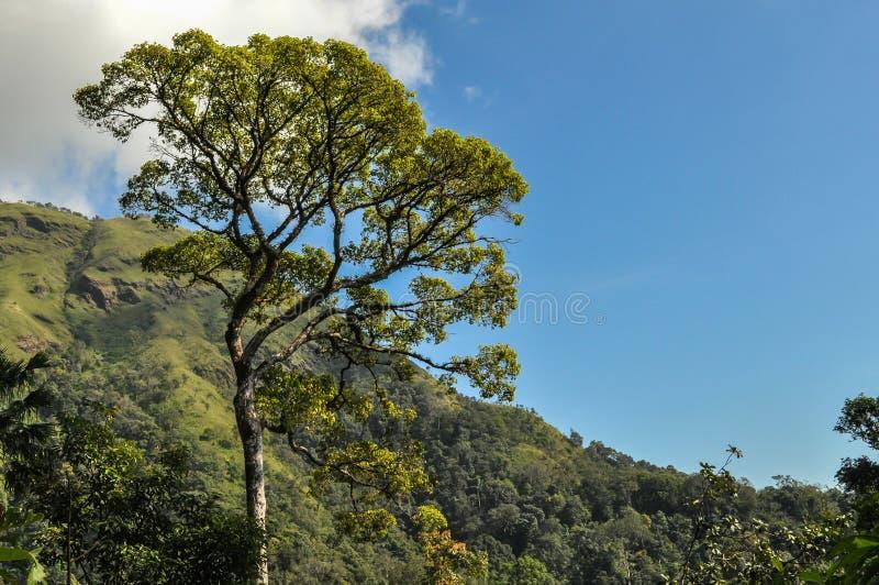 大树和蓝天 库存图片