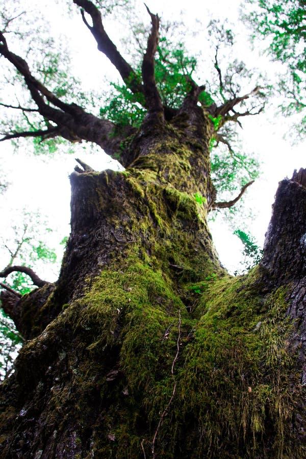 大树在前面 免版税库存照片