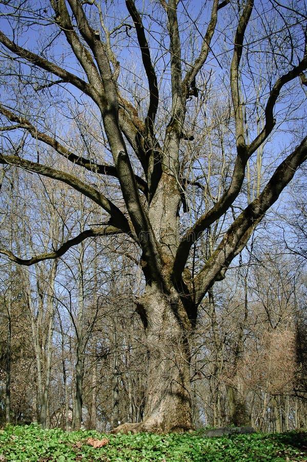 大树在有绿草领域和天空蔚蓝背景的美丽的公园 库存照片