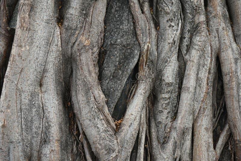大树皮木纹理背景 免版税库存照片