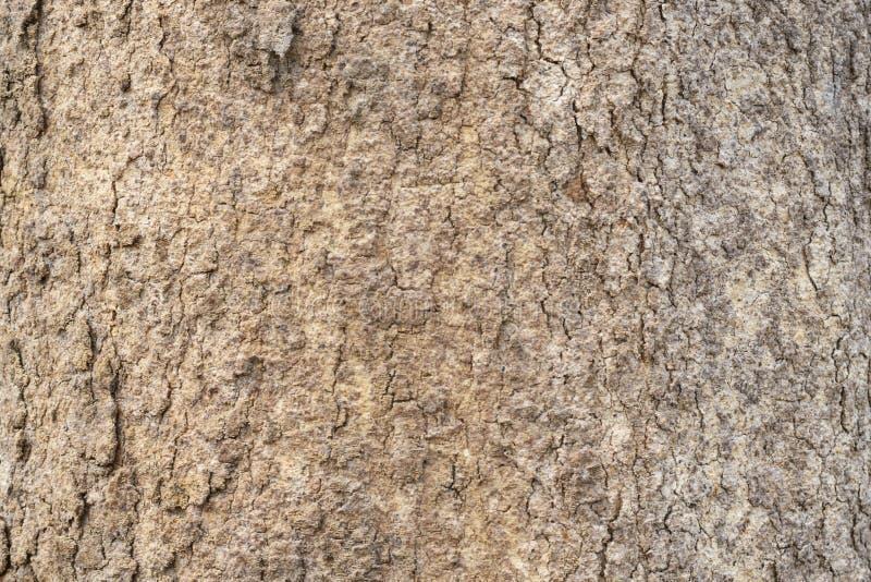 大树皮纹理背景 库存照片